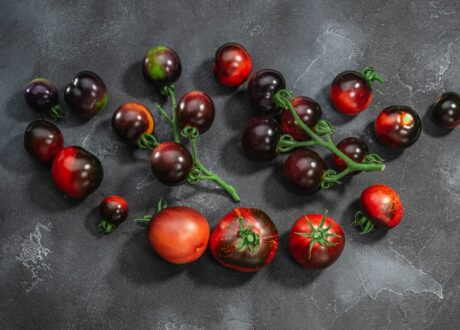 Reife Dark Galaxy-Tomaten
