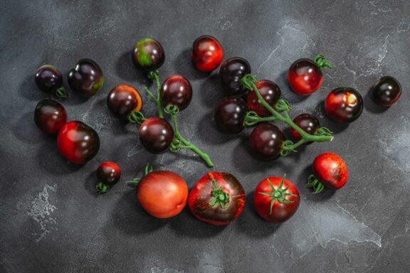 Dark-Galaxy-Tomate: Die melierte Tomate im Portrait