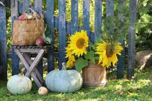 Gartenarbeit im September: Alles auf einen Blick!