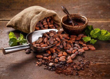 Kakao Als Nahrung Für Kakaomotten