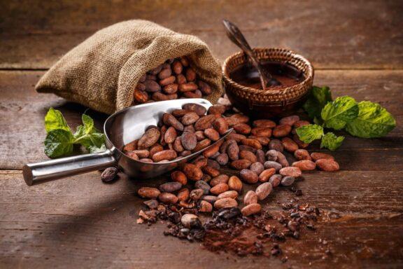 Kakaomotten: Aussehen & Tipps zur Bekämpfung