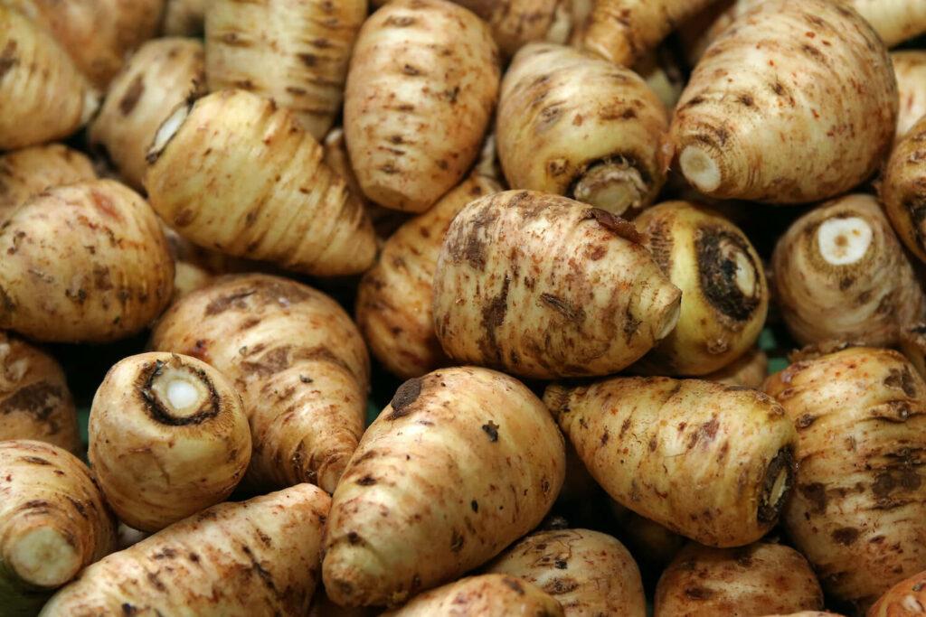 Kerbelrübe: Anbau & Pflege der alten Gemüseart