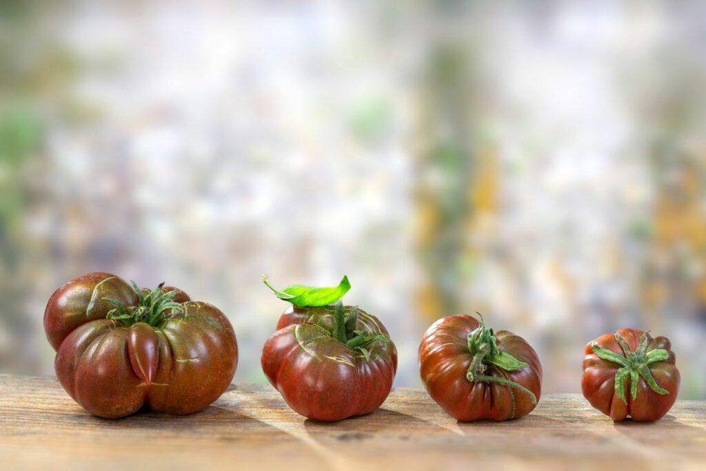 Schwarze von der Krim Tomaten liegen auf einem Tisch