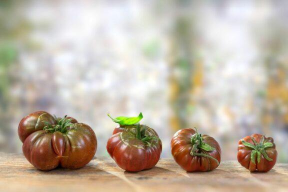 Schwarze von der Krim: Anbau, Pflege & Geschmack der Tomate