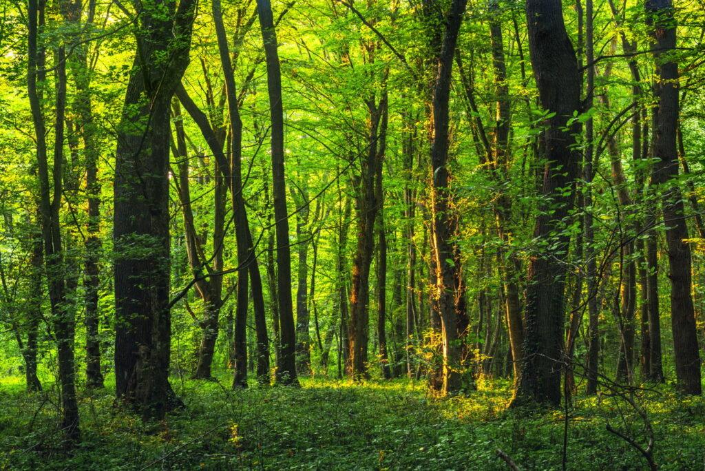 Bäume strukturieren den Waldgarten