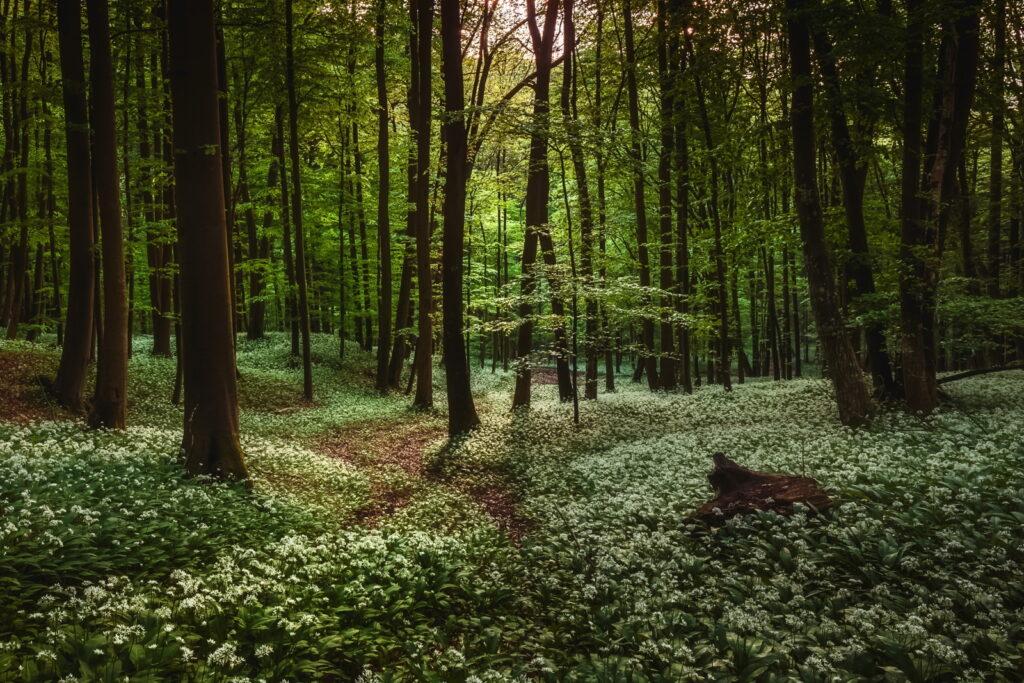 Traumhafte Natur: der Wald