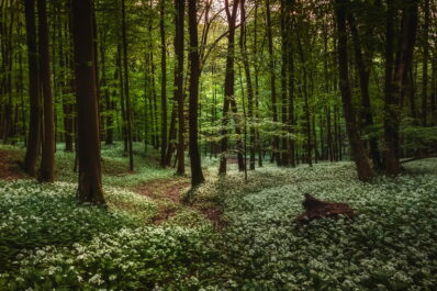 Waldgarten anlegen: Tipps zur Gestaltung & die besten Pflanzen