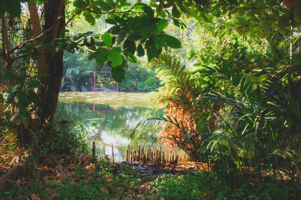 Teich in einem natürlichen Garten