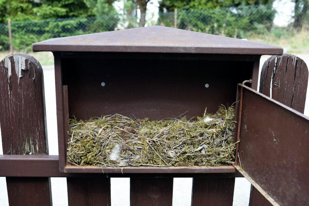 Hausrotschwanz-Nest in Briefkasten