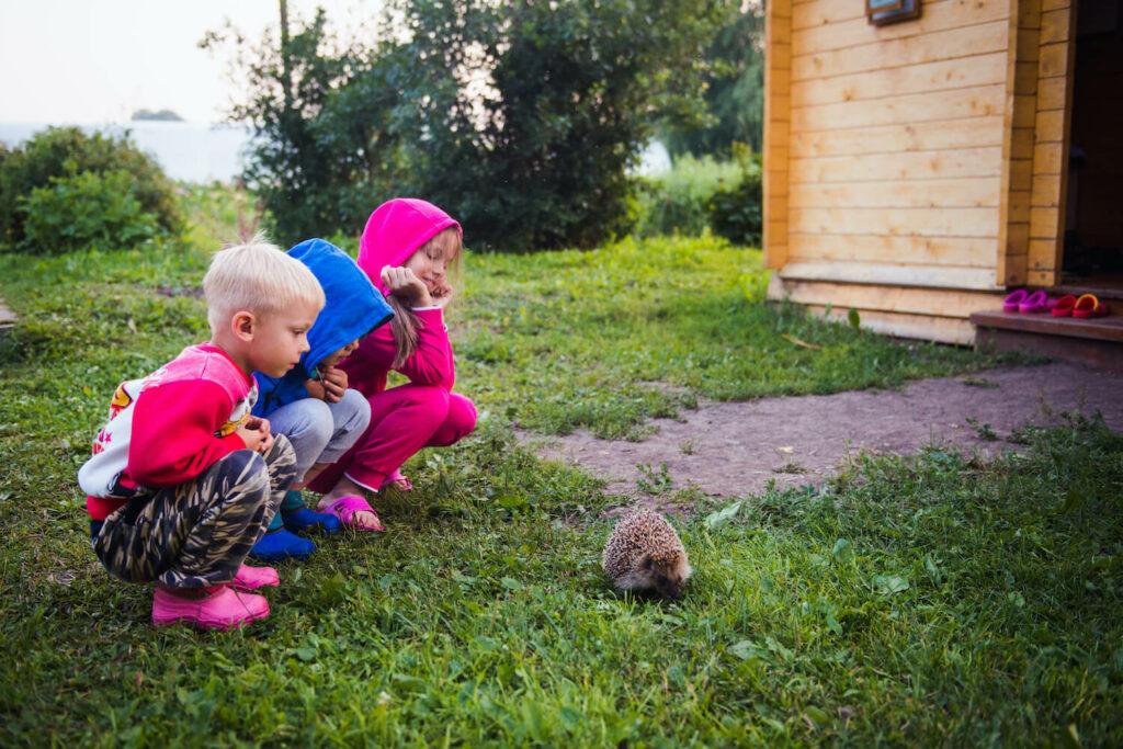 Kinder beobachten Igel