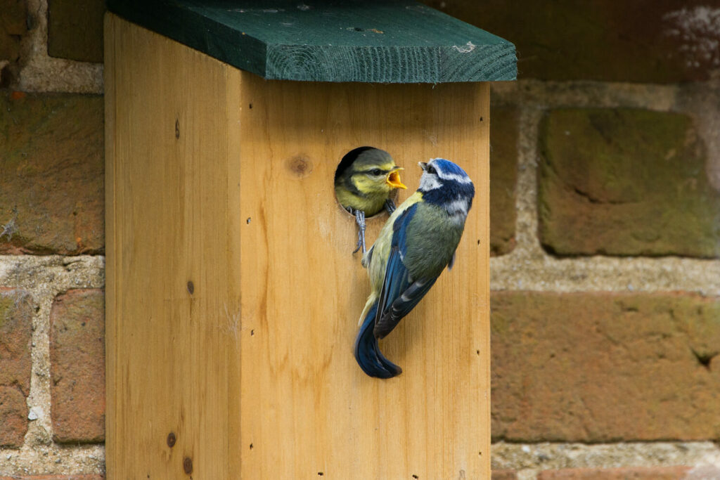 Vögel an Nistkasten