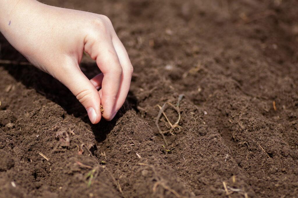 Aussaat von Samen