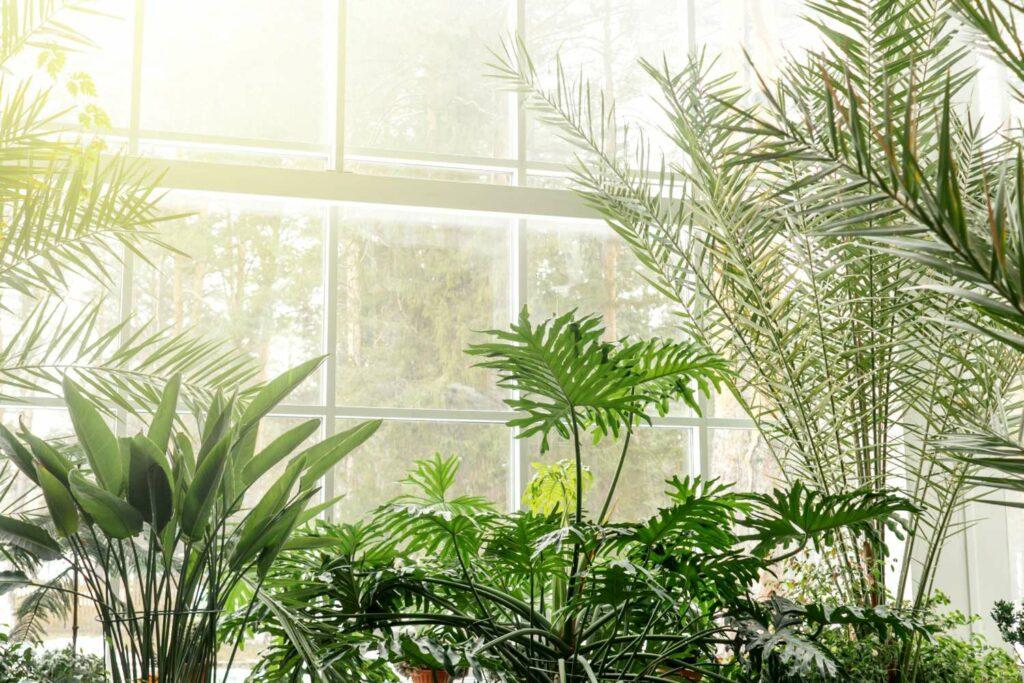 Grünpflanzen im Sonnenlicht