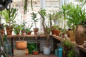 Kübelpflanzen überwintern: So gehen Sie richtig vor
