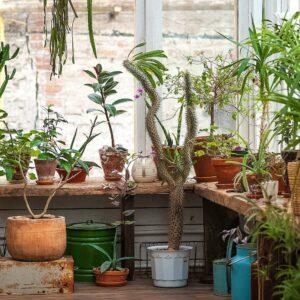 Topfpflanzen Im Winter