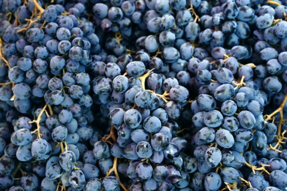 Muscat Bleu: Herkunft & Anbau der Rebsorte