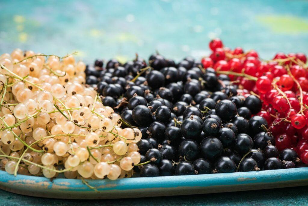 Weiße, schwarze und rote Johannisbeeren auf einem Teller