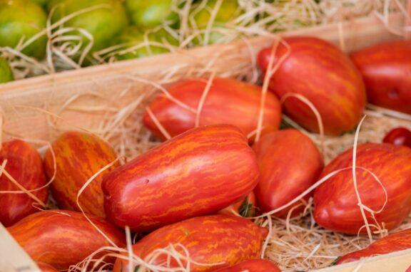 Striped Roman-Tomate: Alles zur gestreiften Flaschentomate