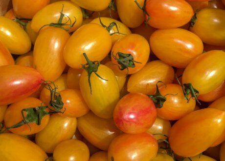Tomaten Der Sorte Blush