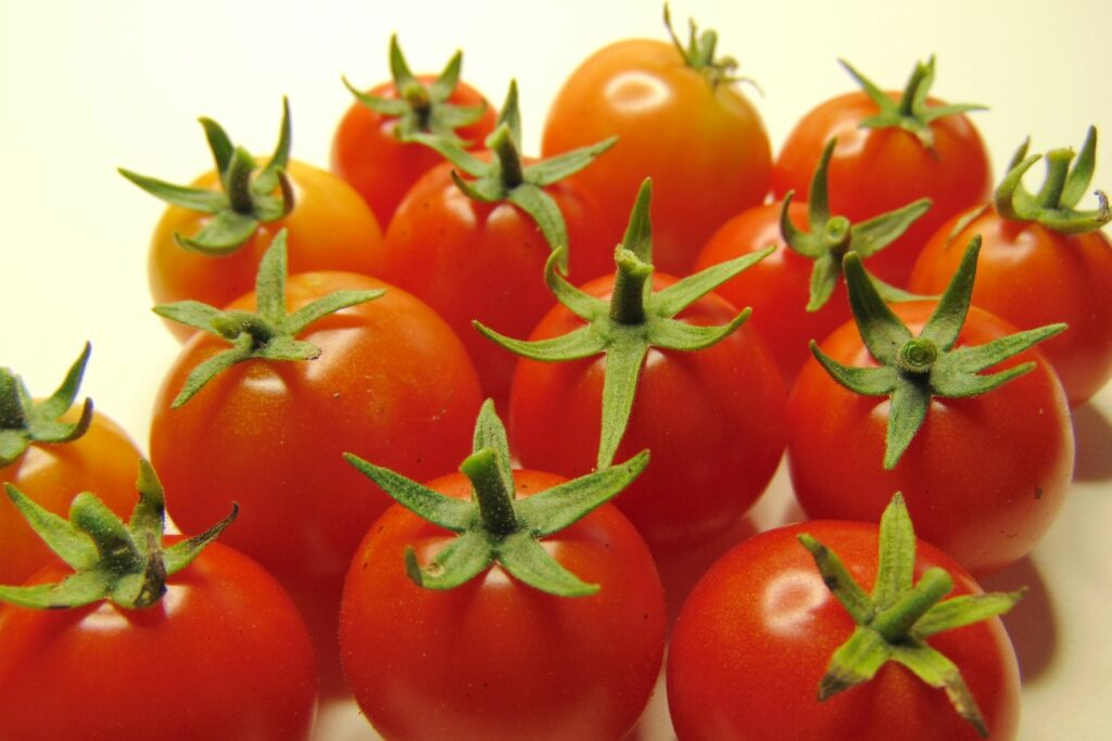 Reife Tomaten der Sorte Tiny Tim