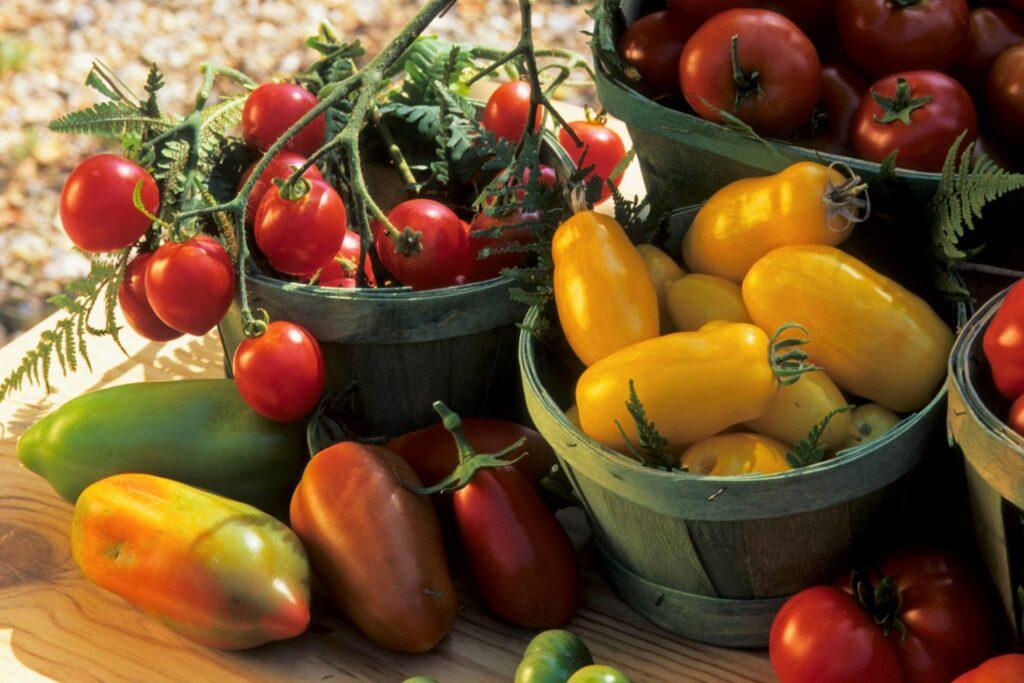 Banana Legs-Tomaten und andere Tomatensorten in Schüsseln