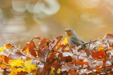 Naturgarten im Herbst: Gartenarbeiten im naturnahen Garten