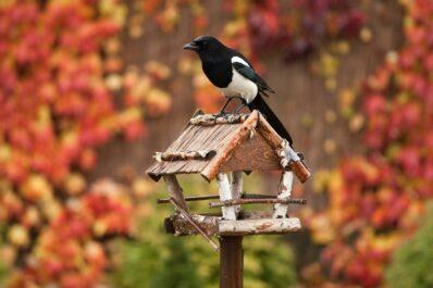 Gartenarbeit im November: Alles auf einen Blick!