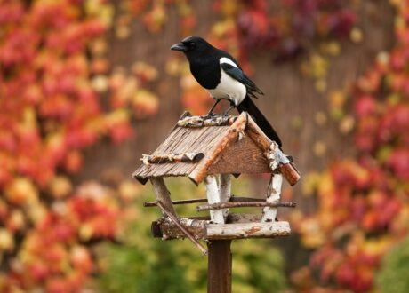 Vogelfutterhaus Im Herbst