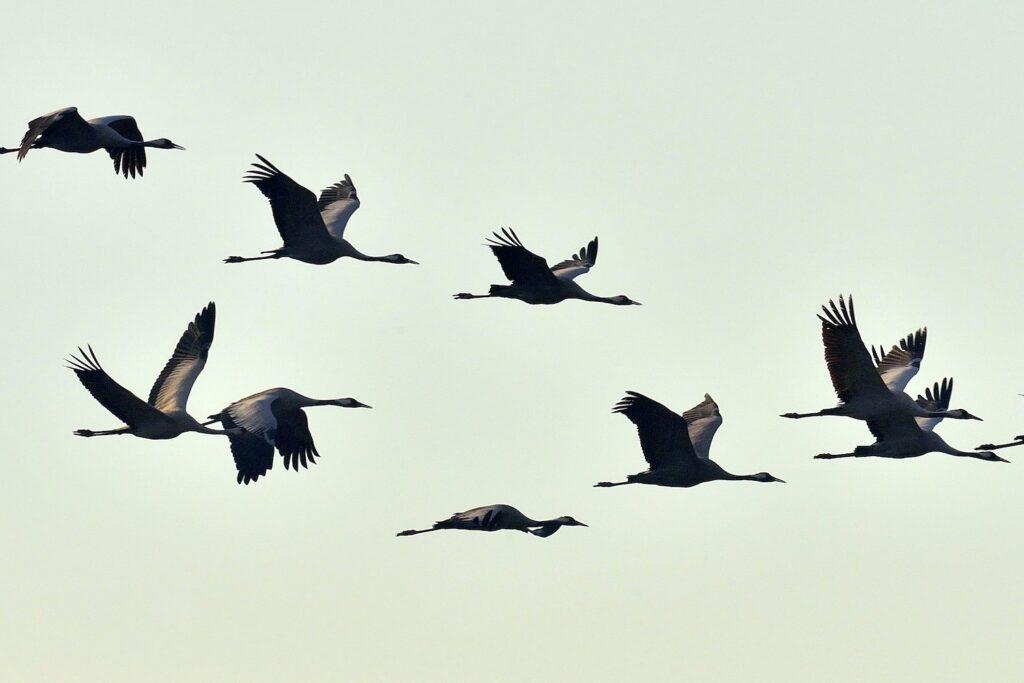 Zugvögel: Routen, Zeitplan & Liste heimischer Zugvogelarten