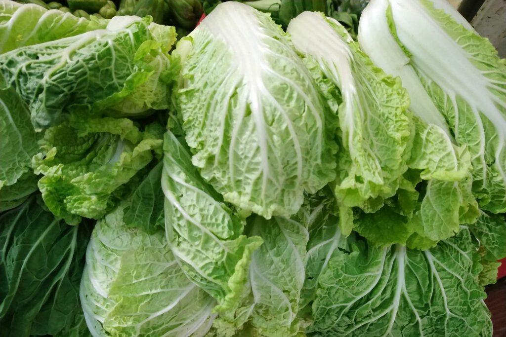 Zuckerhut-Salate