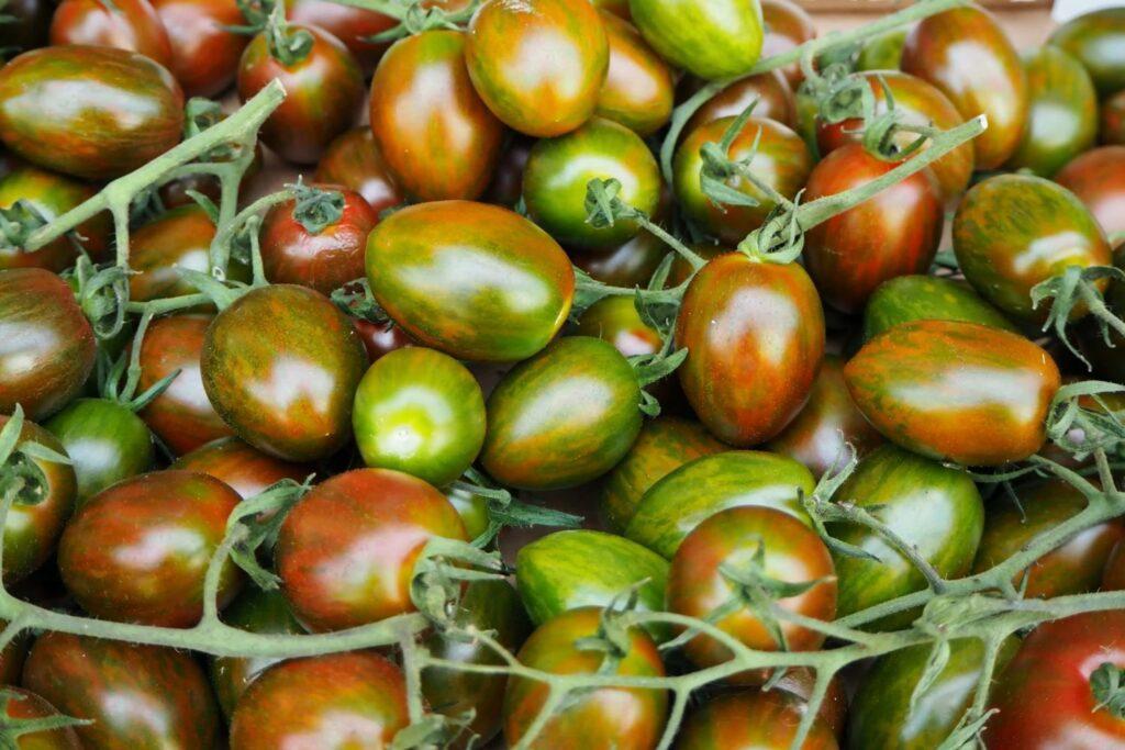 Datterino-Tomaten