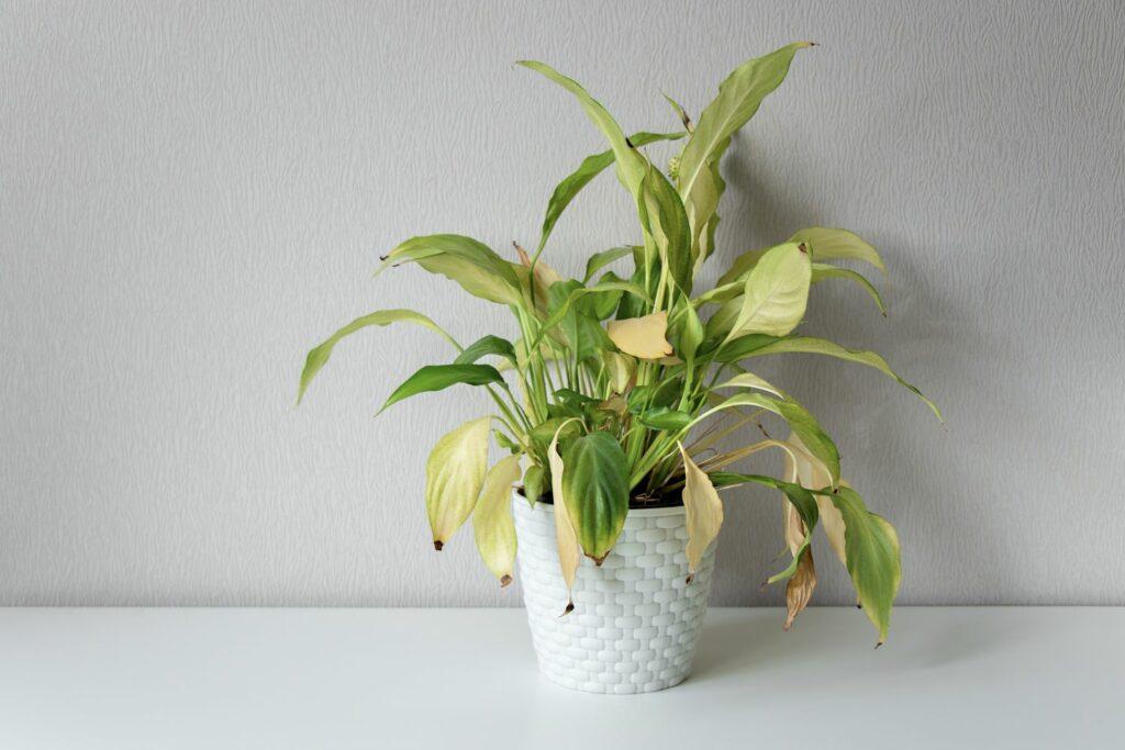 Einblatt mit gelben Blättern