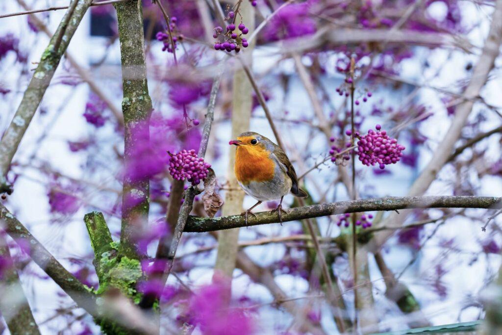 Vogel sitzt in Liebesperlenstrauch