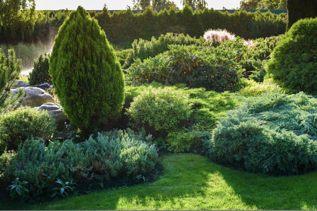 Nadelbaumarten für den Garten