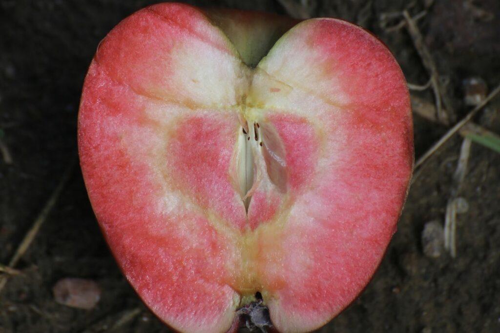 Apfel Redlove