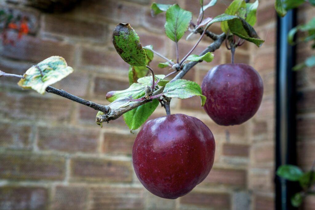 Redlove Oysso-Apfel