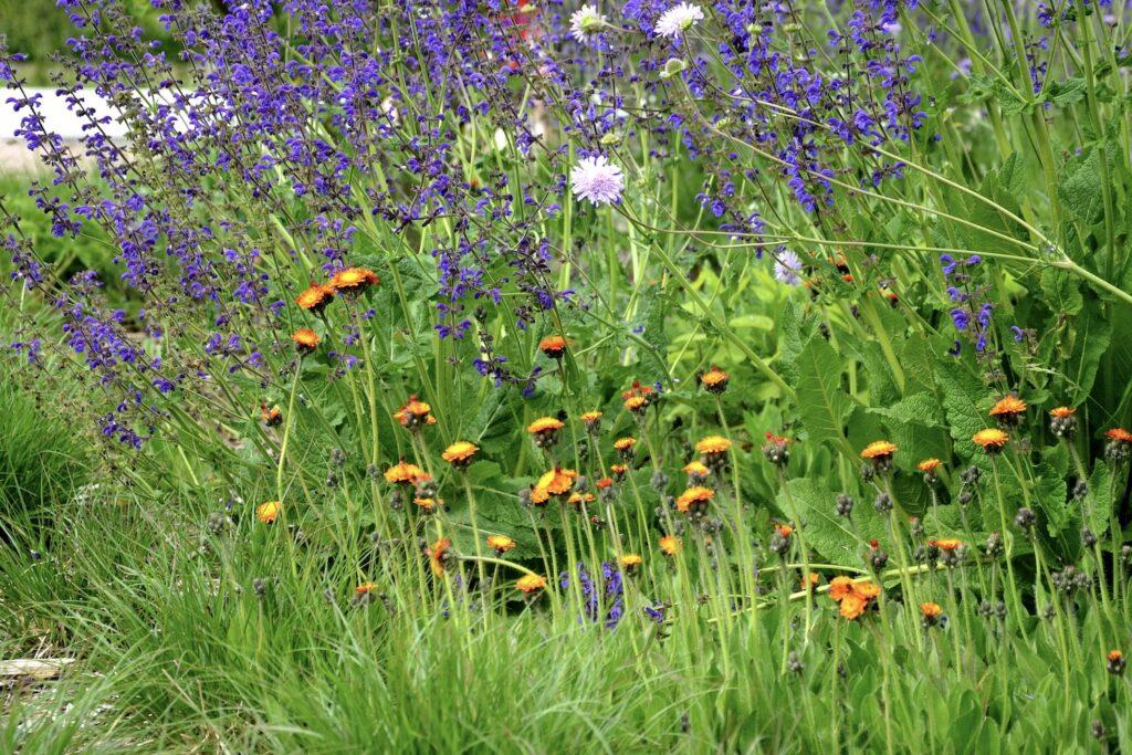 Pflanzenkombination in Staudenbeet