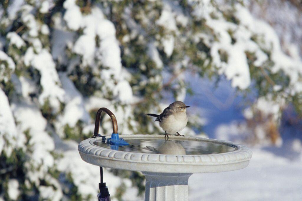 Vogelbad im Winter
