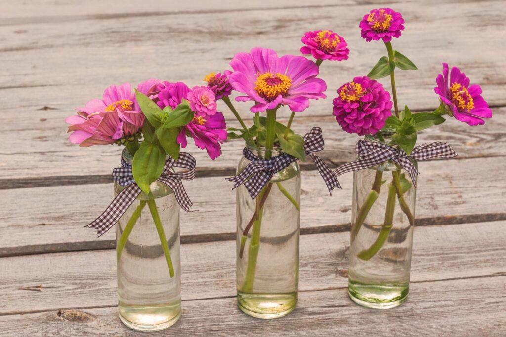 Zinnien in Vasen
