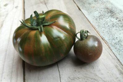 Chocolate-Stripes-Tomate: Wissenswertes zu der gestreiften Tomate