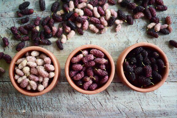 Maulbeerbaum-Sorten: Übersicht über die rote, schwarze & weiße Maulbeere