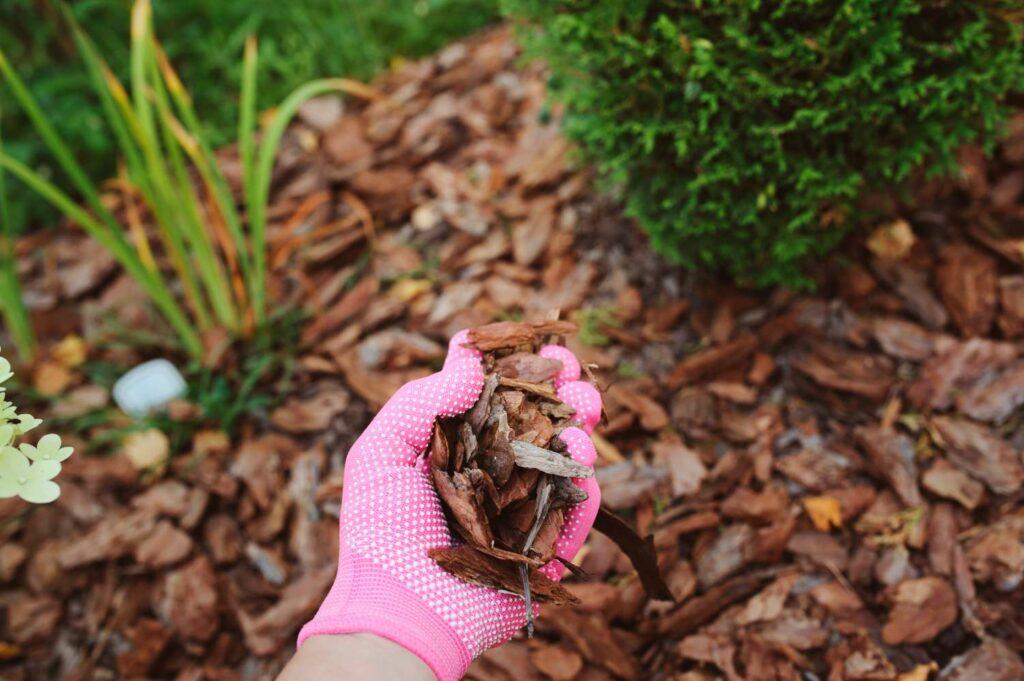 Rindenmulch für Hortensien