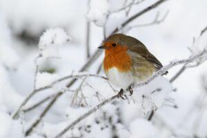 Standvögel: Begriffserklärung & heimische Standvogelarten