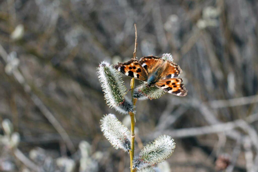 Schmetterlinge im Winter