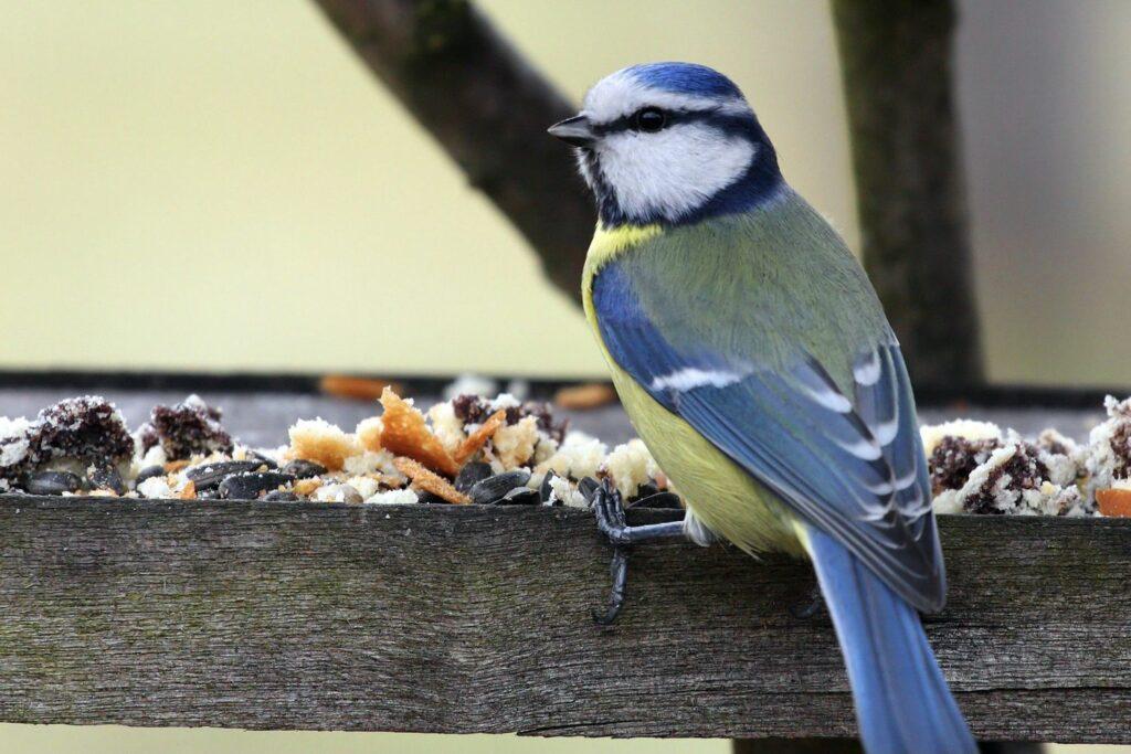 Vogel mit Vogelfutter