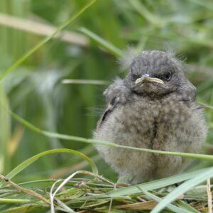 Vogelbaby gefunden: Was man tun sollte