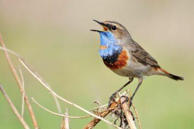 Warum zwitschern Vögel? Gründe, Tages- und Jahreszeiten & mehr