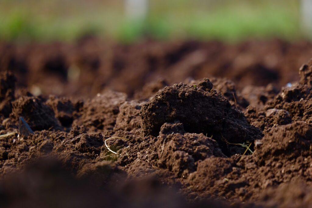 humushaltiger Boden