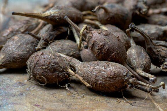 Erdbirne: Pflanzen & Pflege von Apios americana
