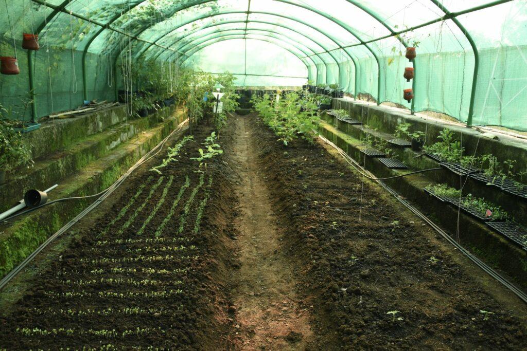 Gewächshaus mit verschiedenen Gemüse-Arten